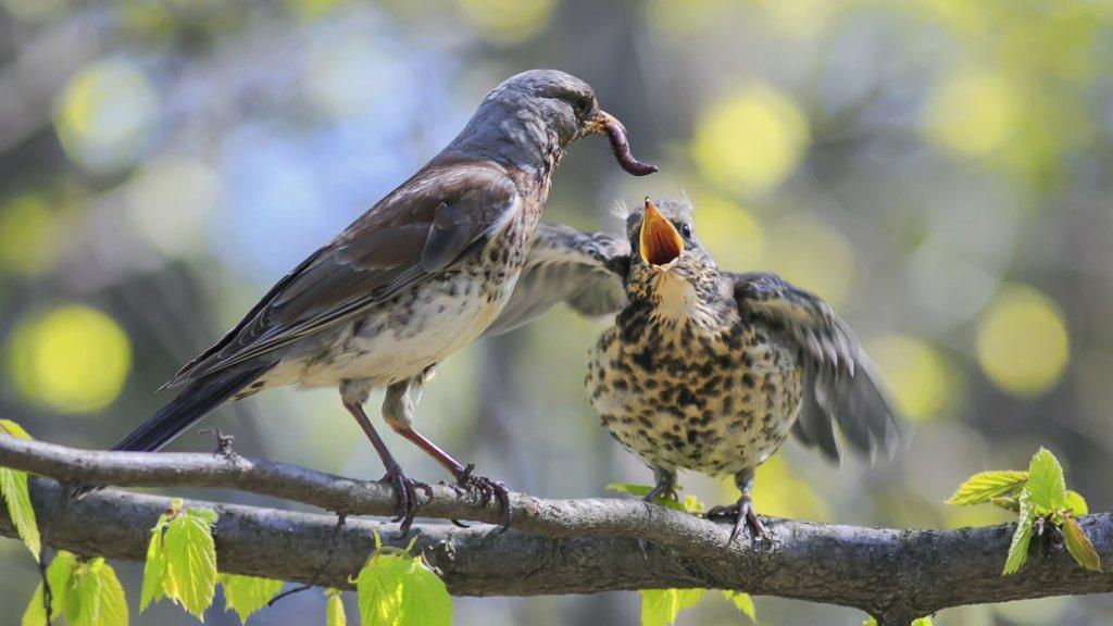 test Twitter Media - Oproep vogelbond: red pasgeboren vogeltjes, geef ze water https://t.co/ETTjzGVm6E https://t.co/p95QGxZWQs