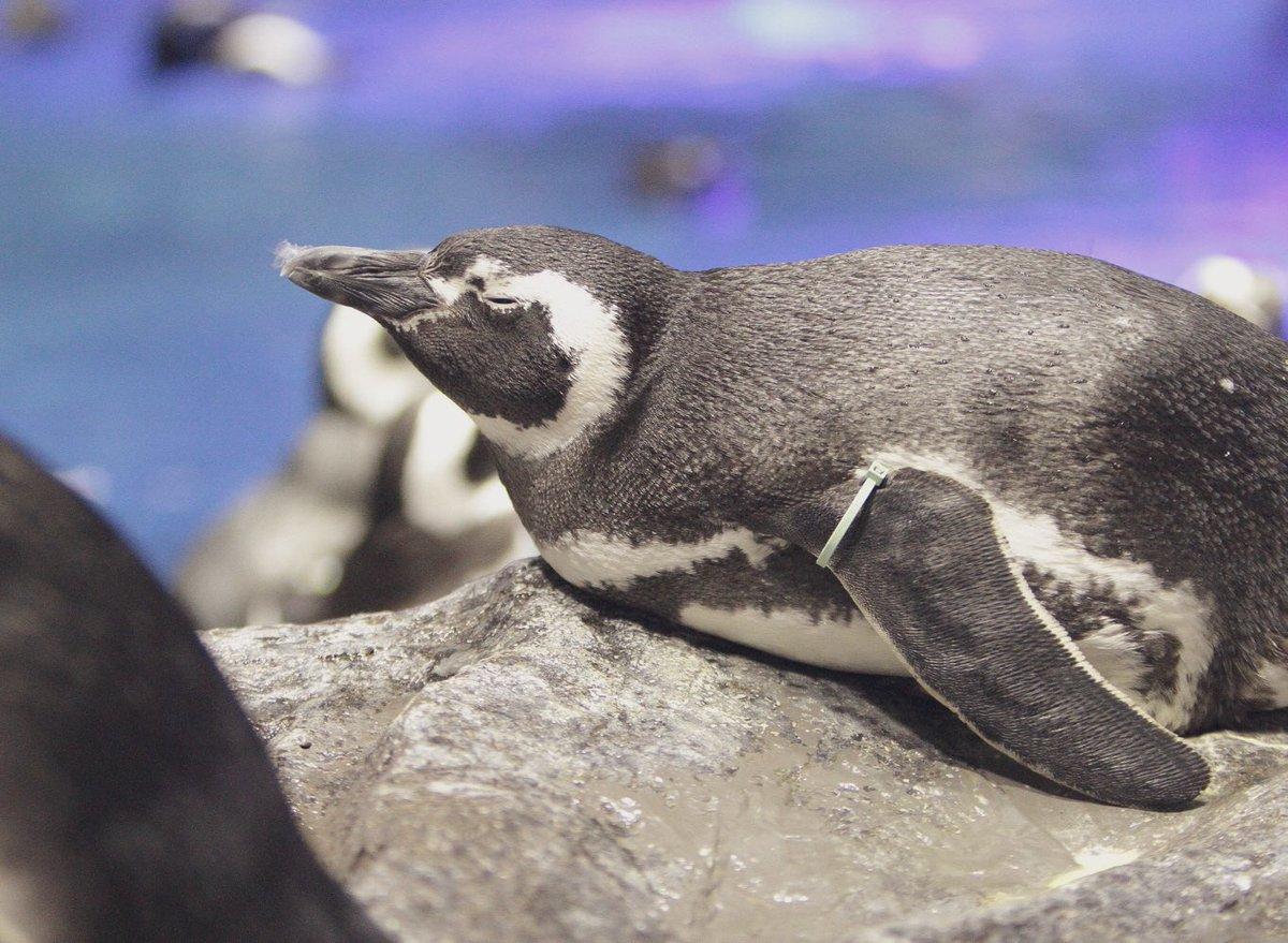 Sumida_Aquarium photo