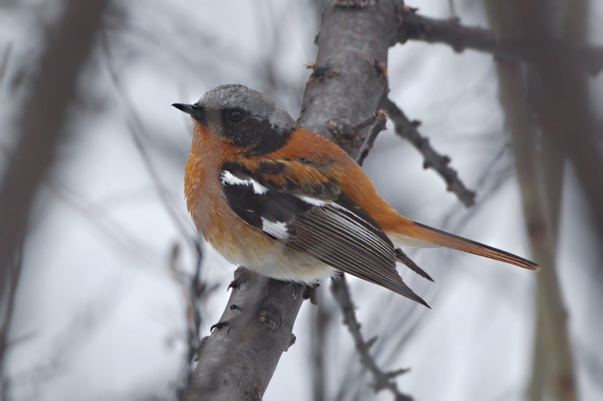особи имеют птицы красноярска фото и названия приложения