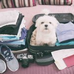 Image for the Tweet beginning: Traveling with pets: Everything you