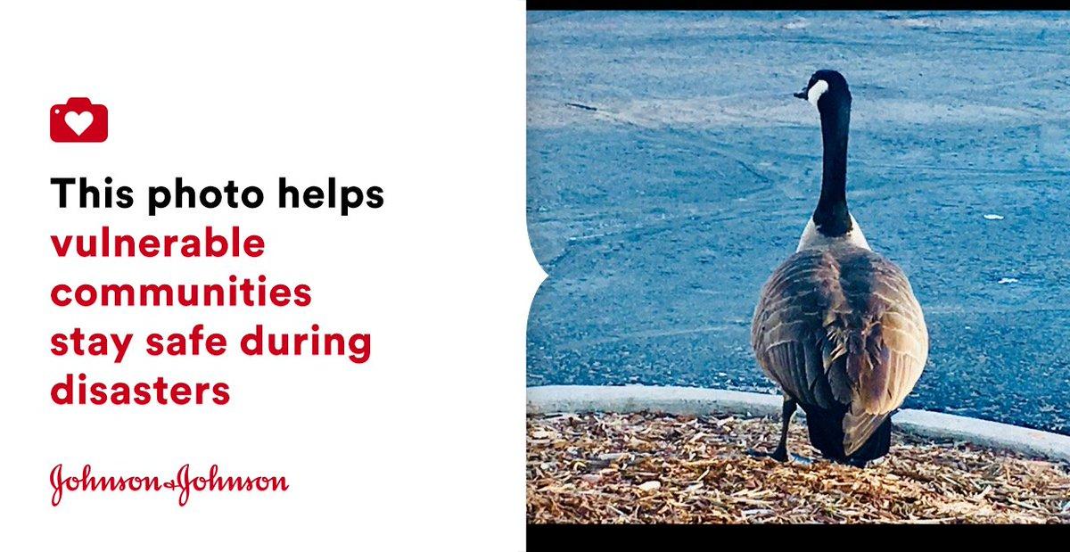 #Goose | #NaturePhotography #Bird #WildLife | #jnj @donateaphoto #Americares #cycloneidai http://bit.ly/2INShDr