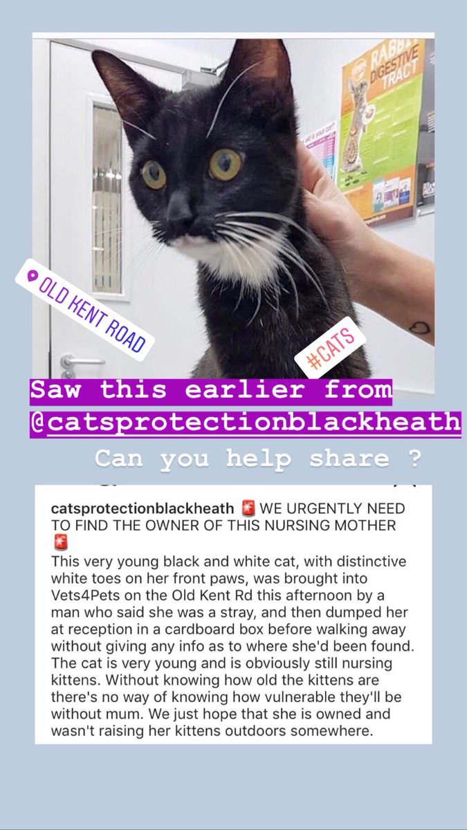 The wonderful people @cats_blackheath are looking after this young mum . She is likely missing her kittens and they are desperate to reunite her with them . Can you help ? She was handed in on the old Kent road ? #southlondon  #CatsOnTwitter #Caturday