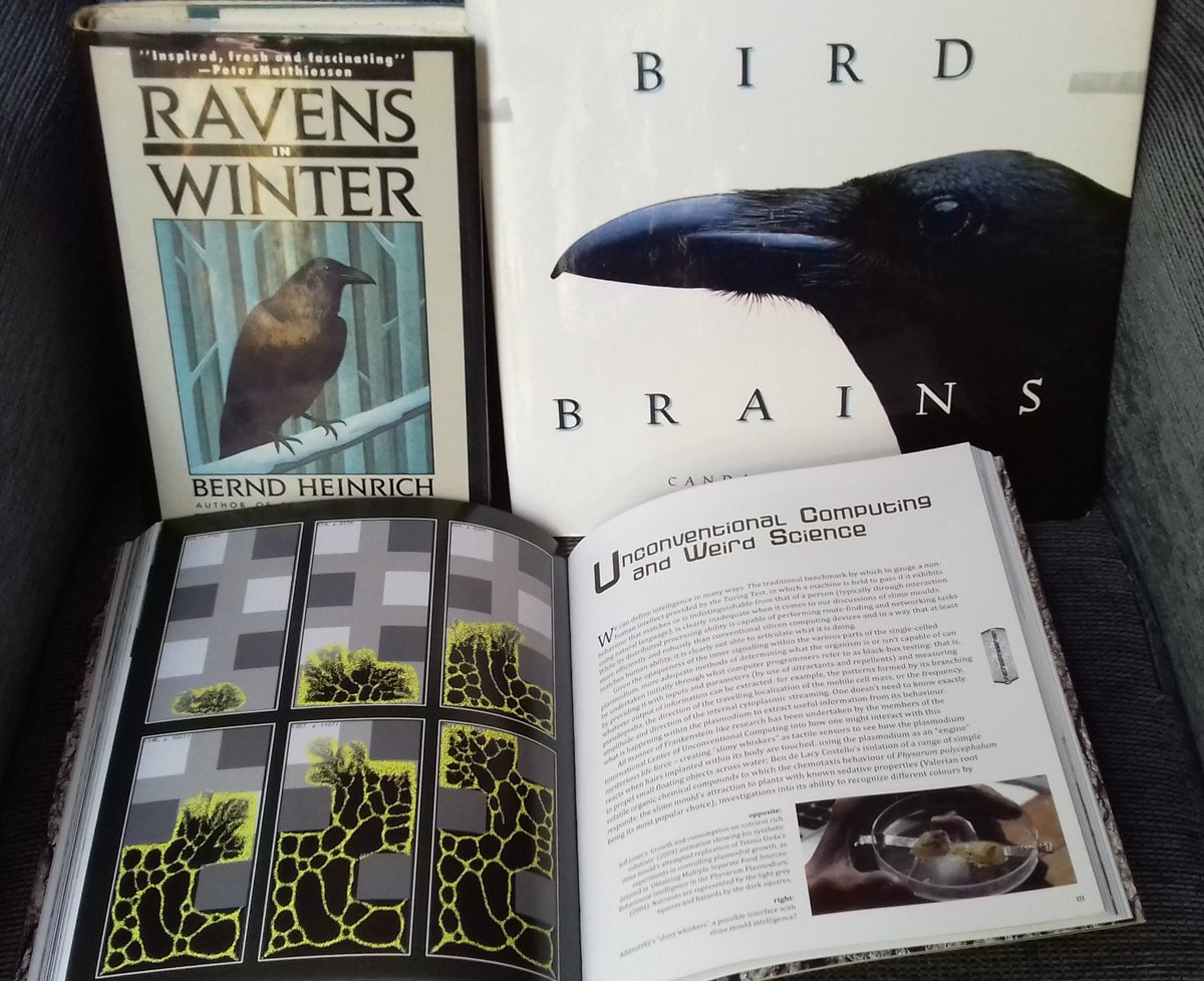 My last book hunting in my favourite English bookstore here in Barcelona, (Hibernian Bookstore https://www.barcelona-life.com/hibernian-books ) was very successful: on ravens, bird brains and Physarum intelligence. Awesome.