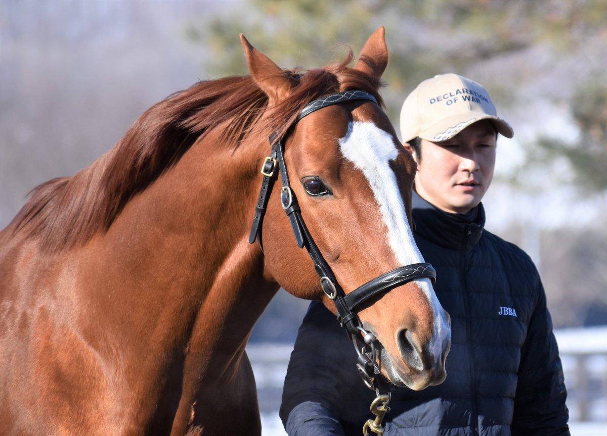 ケープブランコさん、12歳のお誕生日おめでとう!昨年日本での初年度産駒がデビューを迎え、その中からランスオブプラーナが毎日杯を制覇し重賞馬に✨門別でも活躍馬を出しているので、今後が楽しみです!今シーズンは種付け料も値下がりしているので、たくさんの繁殖さんを集めてそうですね!
