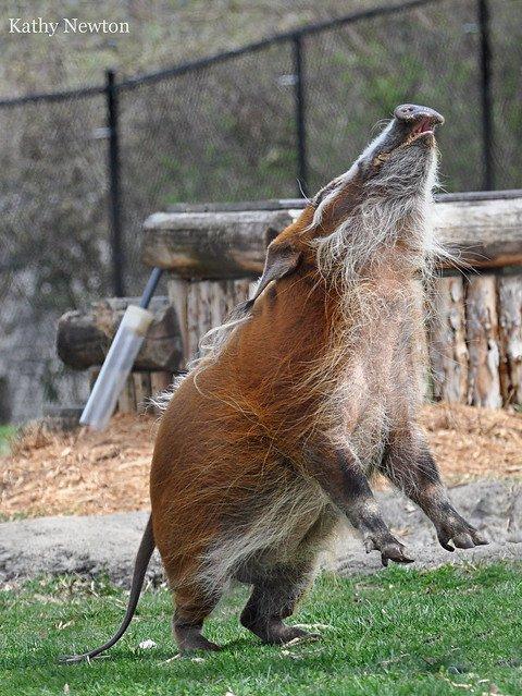 Cincinnati Zoo's photo on #FridayFeeling