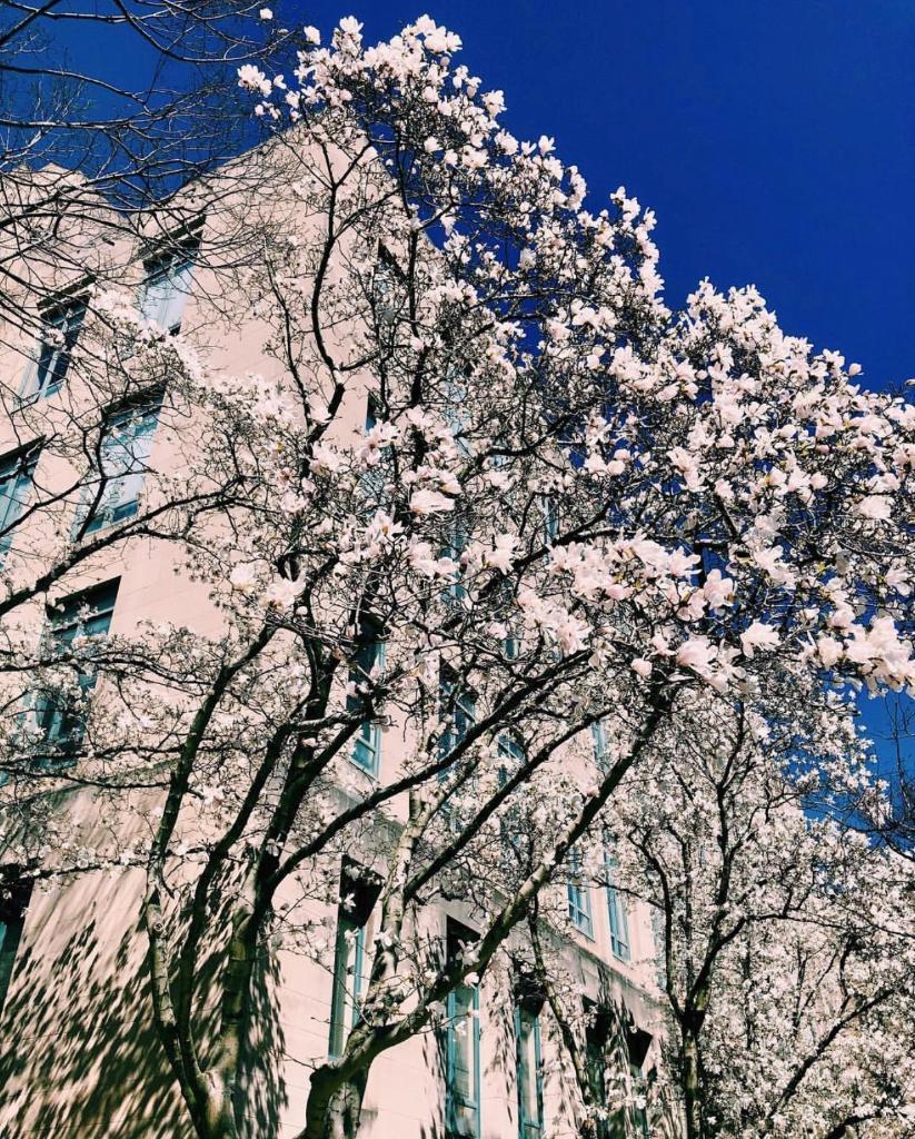 We hope you're enjoying this blustery spring day! 🌬[📸 credit: @emmasjohnson]