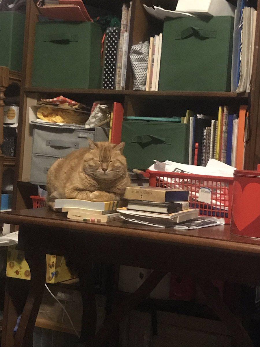 Mi tiene d'occhio facendo finta di sonnecchiare #Caturday #CatsOnTwitter #catsofinstagram #mybeautifulcat