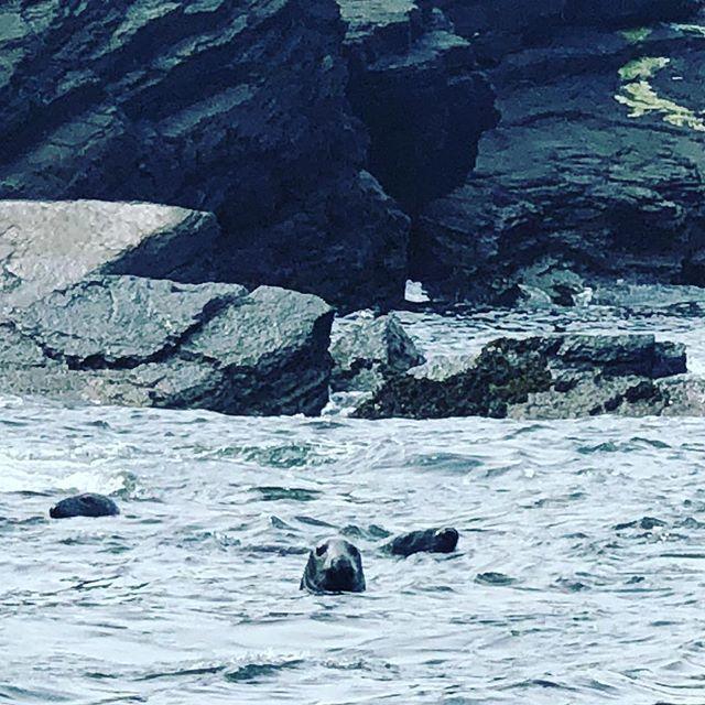 Seals off Blasket Island. They send their love. #dinglestyle #irishstyle #sq1eurotour #☘️💚 #ecotours #wildwildlife @dingle_sea_safari__ http://bit.ly/2VU4F8w