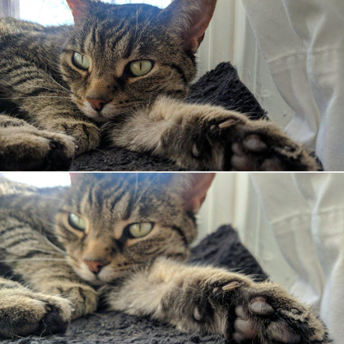 toes  #caturday #DailyCatPic #CatsofMastodon #MastoCats #cats