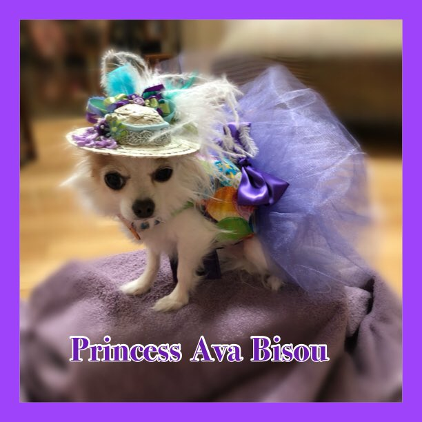 I'm so excited to wear my new dress for Easter!  It matches one of my hats perfectly! I'm all ready for church, Easter dinner & the Easter Egg hunt! Thank you so much Sandy Tulicki!!  #PrincessAvaBisou #puppymillsurvivor #PrisonertoPrincess #easteroutfit #HappyEaster<br>http://pic.twitter.com/xhyDE158hk