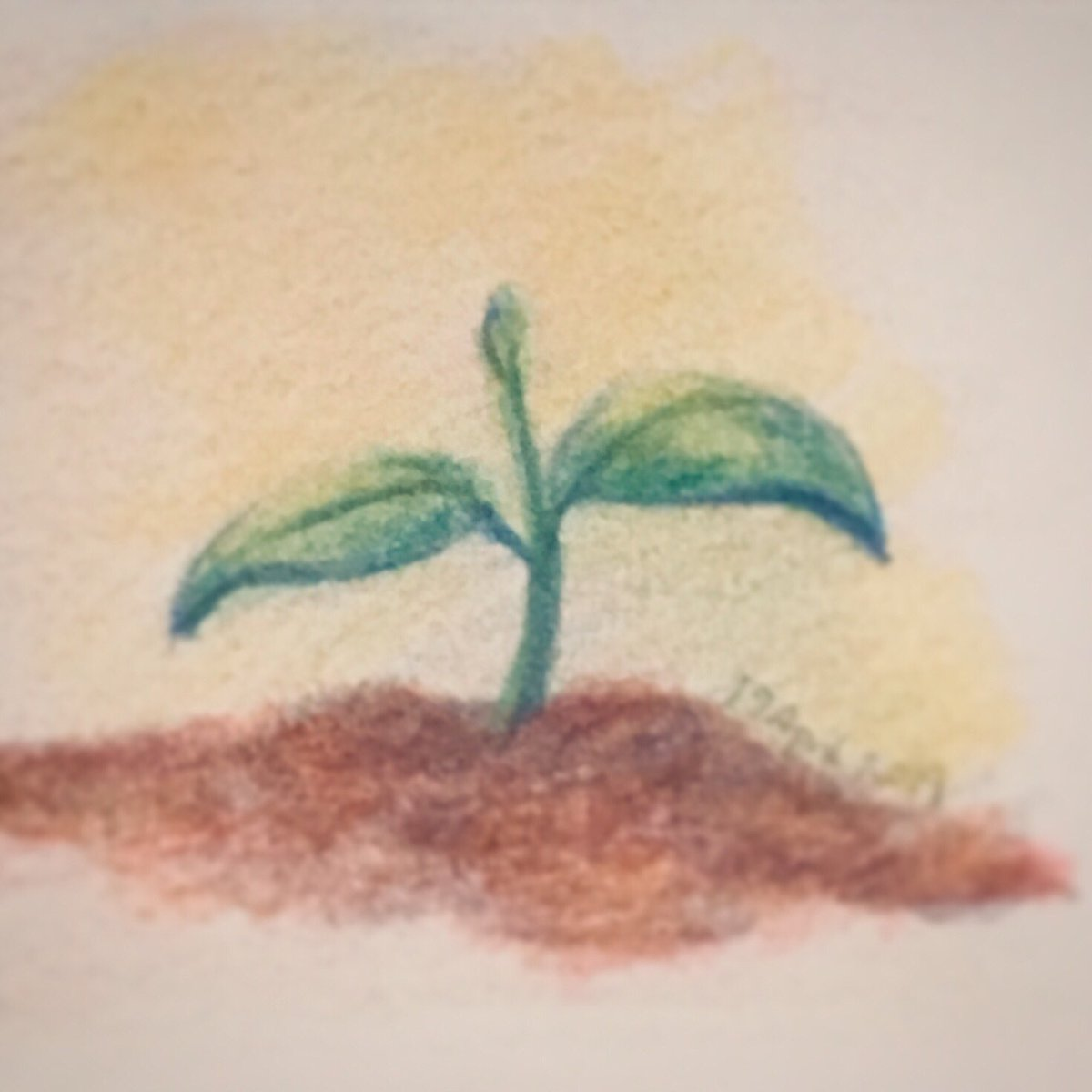 Small little sprout, spreading out for spring #plant #green #pencils #alliteration