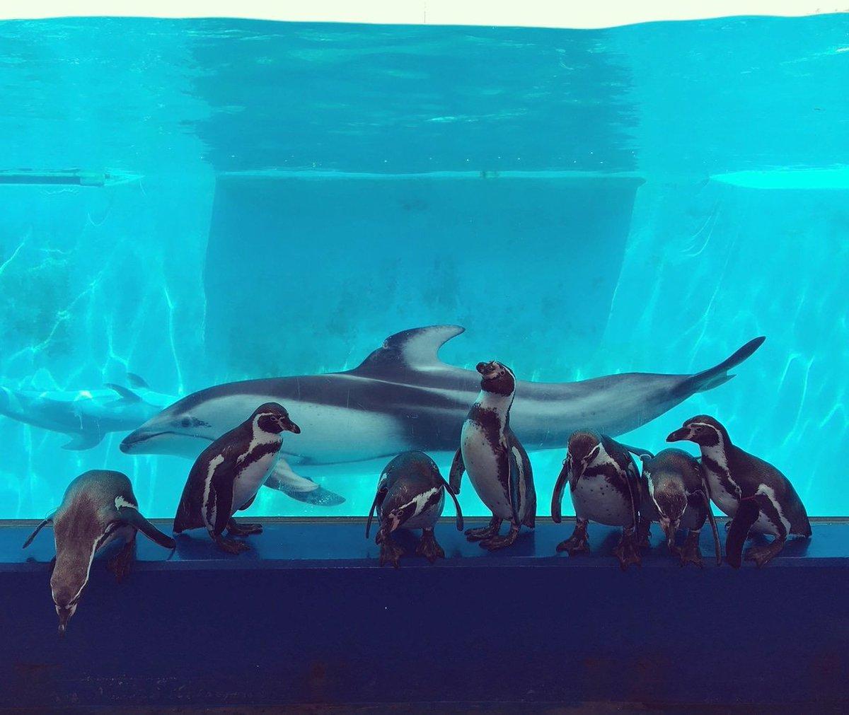 aquariumshimoda photo