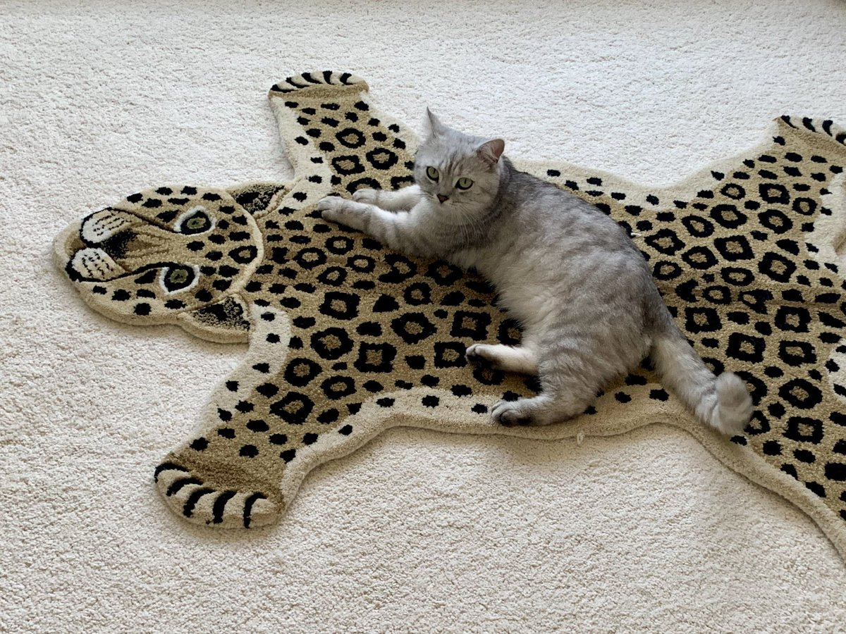 Happy #caturday everyone. Do you like my new tiger rug? #CatsofTwitter <br>http://pic.twitter.com/wiF2issUOi