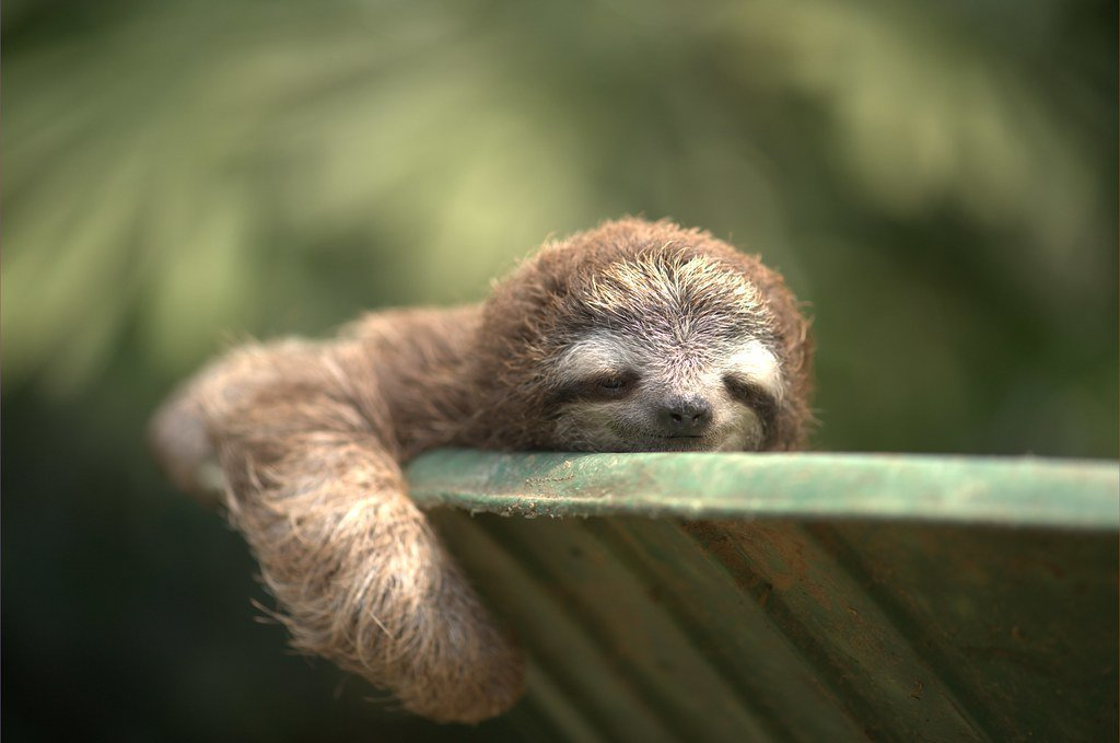 Funny sloth pictures on twitter
