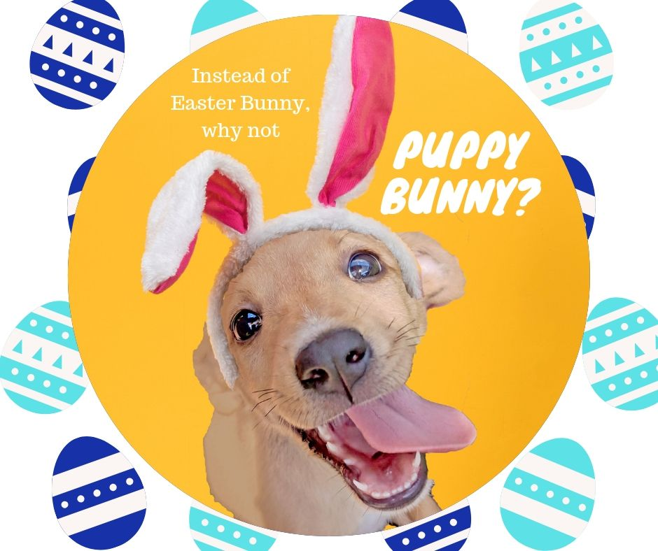 Join us for another #puppy party, at the ranch! We are open from 10am - 5pm, and these fur-babies are itchin' to meet you! Come find your fur-ever friend, this #weekend! 🐶 🐾 🥕 🐰   #bigdogranchrescue #puppyparty #adoptdontshop #rescueismyfavoritebreed