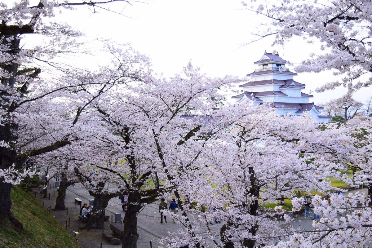 RT @shikishinobu: 満開の鶴ヶ城(4/20)🏯🌸 先日「まだ花見には早い」って呟いたのにあっという間に満開ですよ(苦笑)  さあ花見酒だべ(●´ω`●)♪🍶 https://t.co/KPMPjkvQLQ