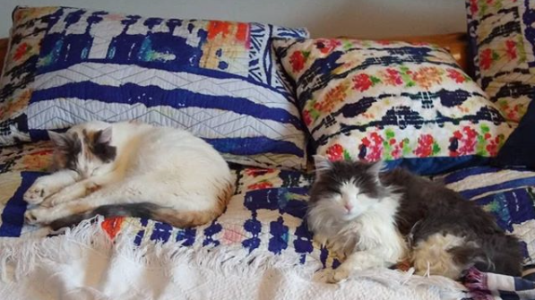 Thinking of my sweet kitties back in #utah on #caturday & hoping they give my pop lots of cuddles for his birthday. They've already stolen his furniture, so they owe it to him... #cats #catsoftwitter #shorthair #longhair #micekillers #snakekiller