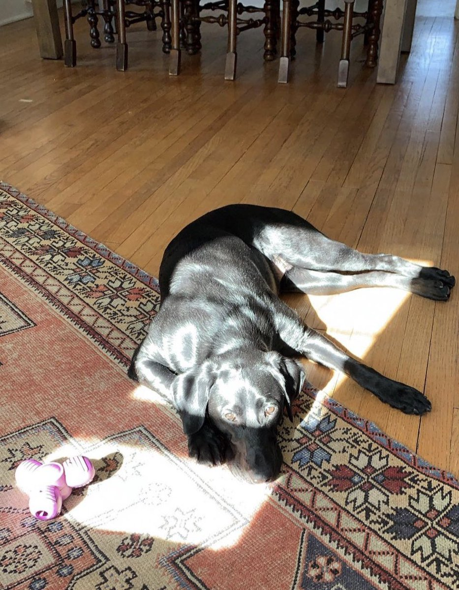 She opened the curtains then went and laid in the sun. Would it be rude to go take her spot? <br>http://pic.twitter.com/ZDnWkrQkWK