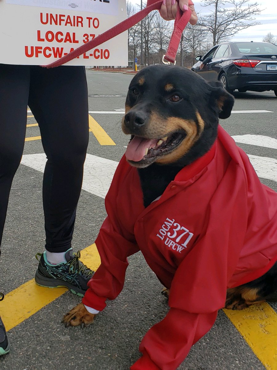 Strike doggos want a fair deal!! Here are some of our furriest family members joining Stop &amp; Shop workers on the picket line &lt;3 &lt;3 (plz keep these pics comin!) #StopAndShopWorkers #1u #StopDontShop<br>http://pic.twitter.com/EaHKVj8Ag6
