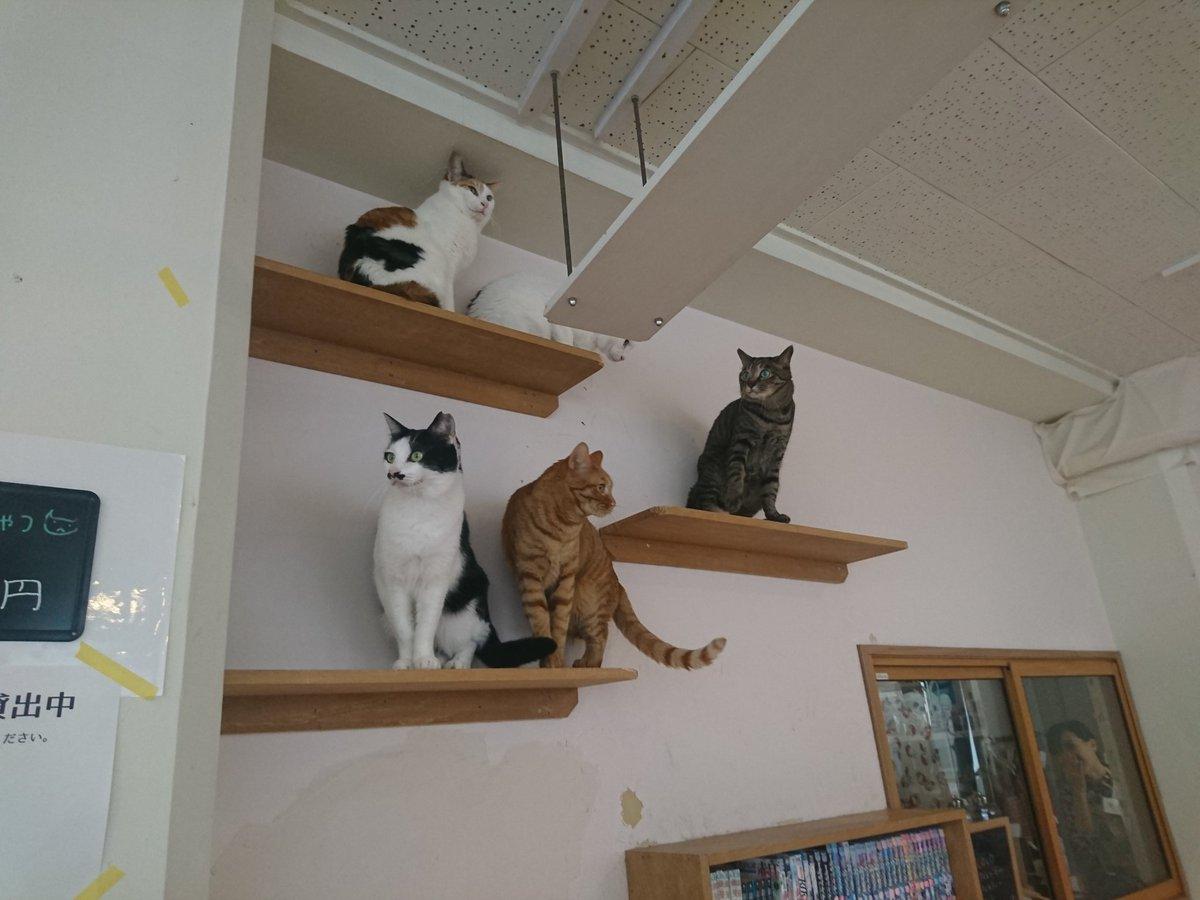 また1人戦友がリタイアと言う名の転職(´Д`)でも会えて良かった。覚えてくれていたし。写真はチンドン屋が猫式の下を通った時に上空へと避難した猫達(笑)ちゃんと眺めているのが可愛い✨