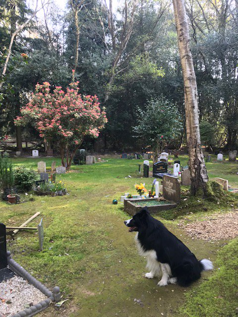 Chestnut Lodge Pet Crematorium and Pet Cemetery (@petcrematorium