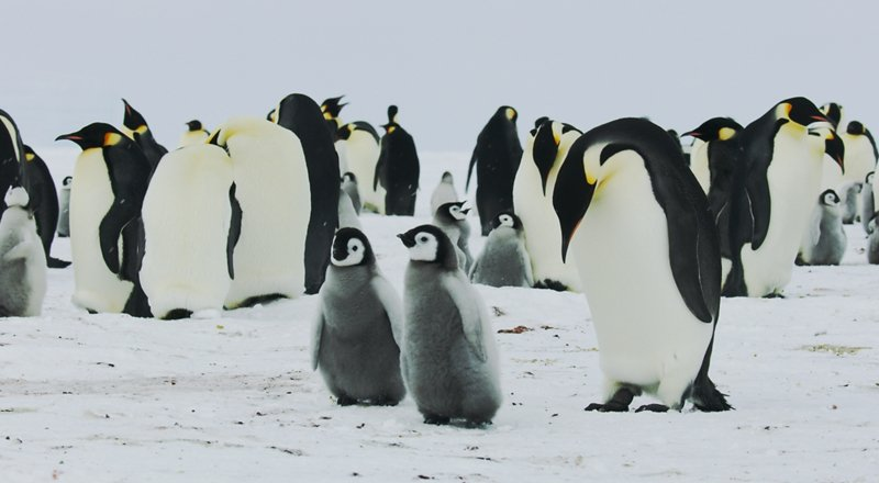 💩🐧 Did you know penguins poo so much, it can be seen from space?  Four things we learnt by watching #EarthFromSpace. 👉 http://bbc.in/2ZluUH9
