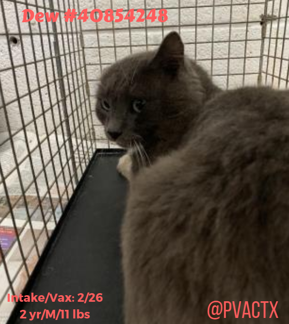 No #mercy nor #compassion for innocrent #Pets 😩😭#KillAnimalCenter #PalmValley #Edinburg doesn`t stop the #killings even on #EasterWeekend 😡  😱Urgent ✉️Interest is needed to save their precious lives  rescue@pvactx.org ⚠️⚠️⚠️https://www.facebook.com/pg/pvacrescue/posts/?ref=notif … …  #SaveAShelter🐱