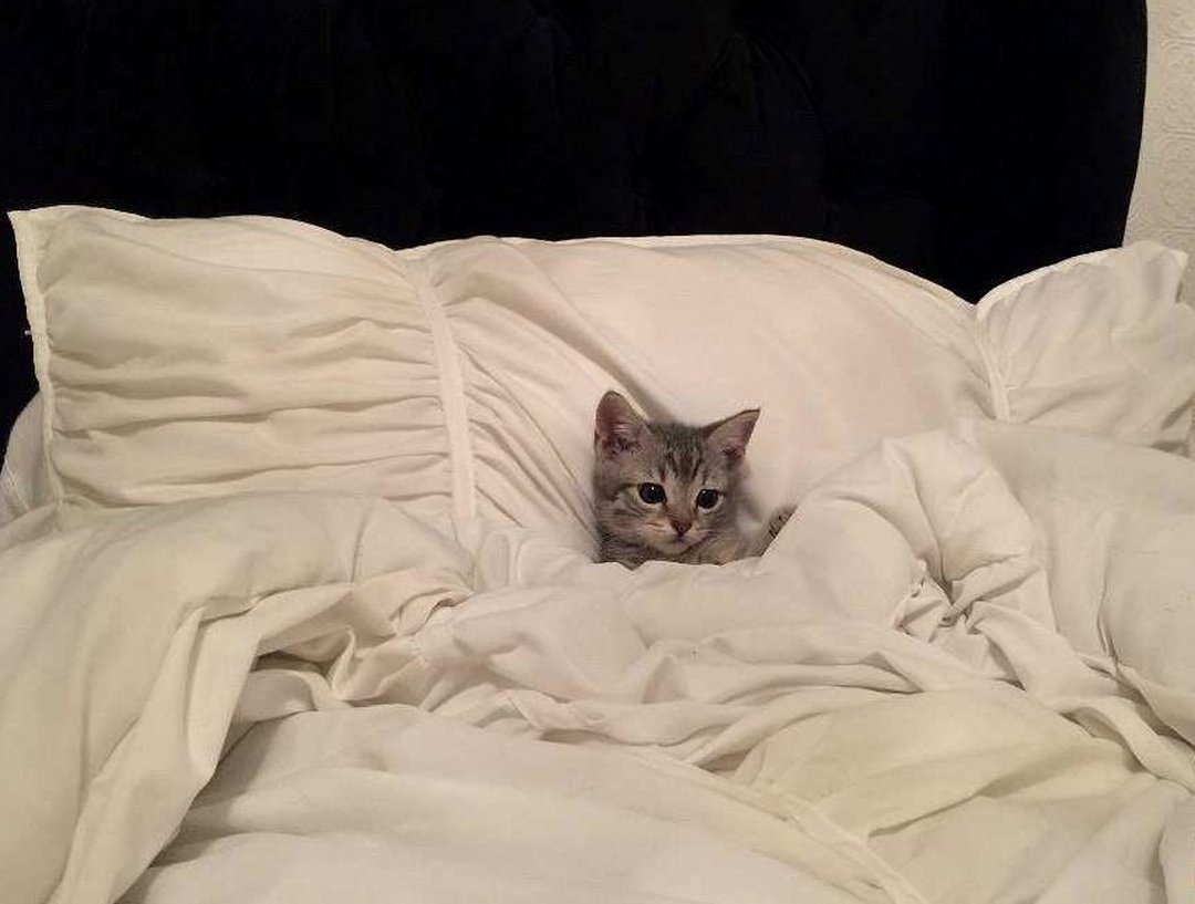 Картинки котенок в кровати