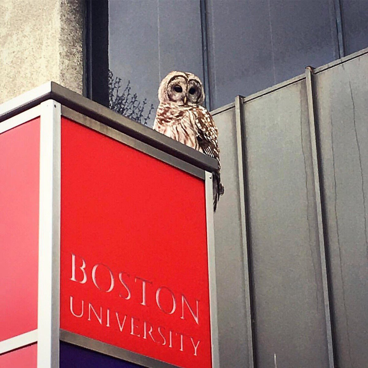 When you're trying to figure out if you're at Hogwarts or Boston University. 🧐 [📸 credit: @co_cowang]