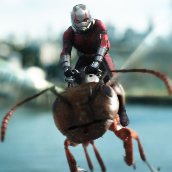 We're over the halfway mark... Time for #12of22 #AntMan up next in the #MCUMarathon in the journey to #Endgame #Marvel