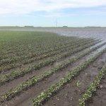 Image for the Tweet beginning: Research Spotlight: Using nitrogen-based fertilizers