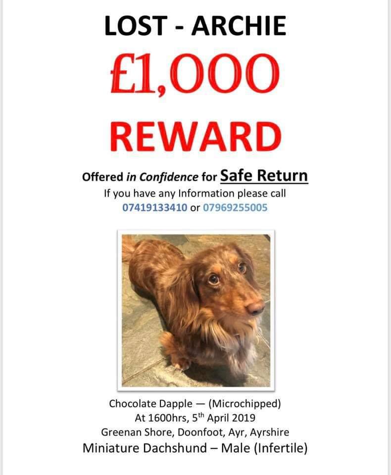 @PetsLocated #lostdog Please help find Archie <br>http://pic.twitter.com/6LHcaAKcru