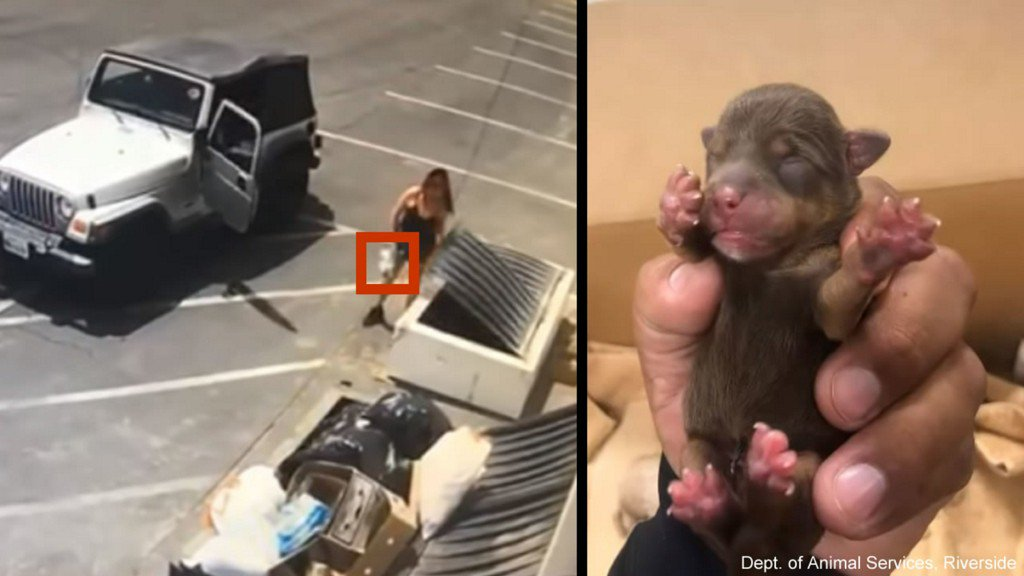 Video catches woman tossing 7 newborn puppies into Coachella dumpster in 90-degree weather https://7ny.tv/2IFo89c