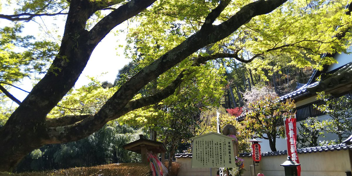 昨日、鈴虫寺へ。一つだけ願いを叶えてくれるというわらじを履いたお地蔵様。鈴虫寺からの景色。小さく京都タワーが見える。...