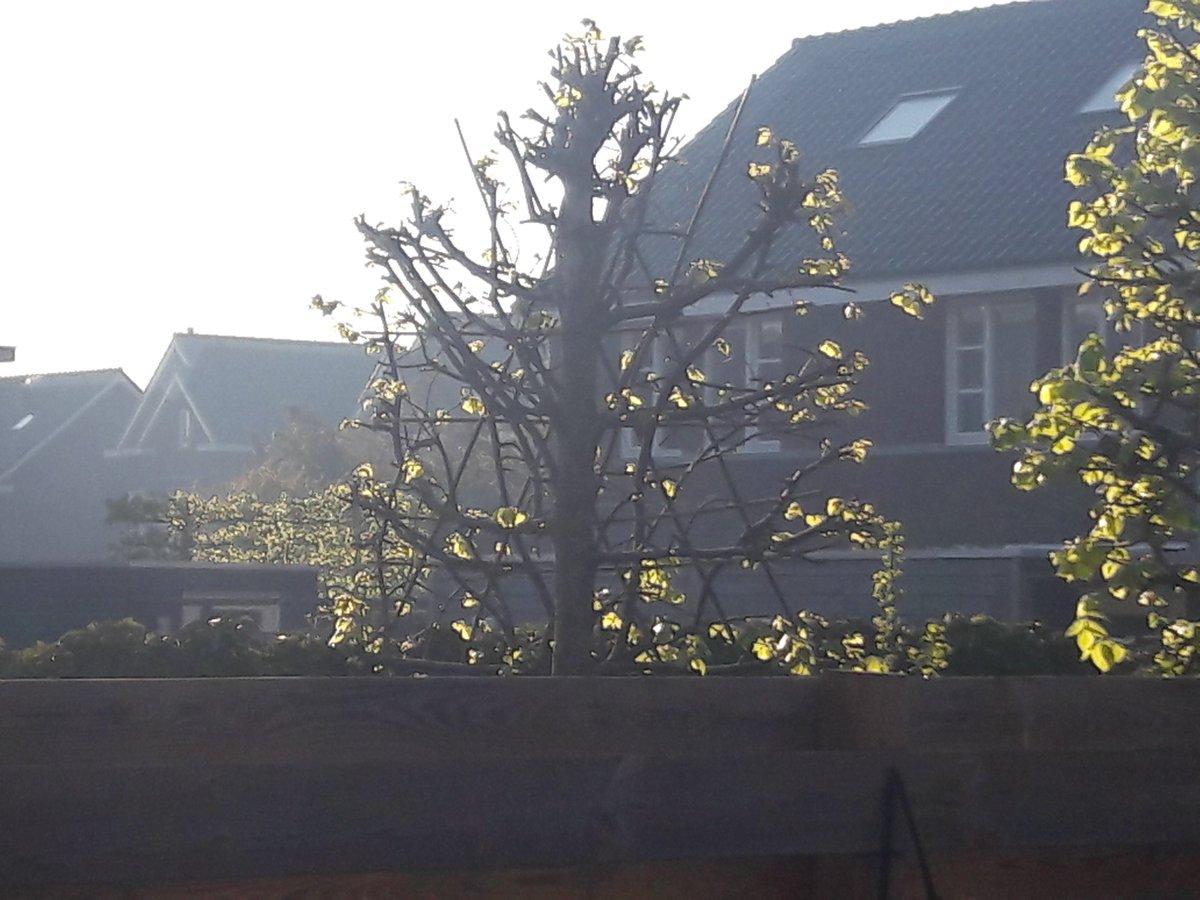 Die blauwe waas? Dat is rook van paasvuren uit Duitsland. Het ruikt er hier in Zwolle indringend naar. https://t.co/6luh8l9Sy5