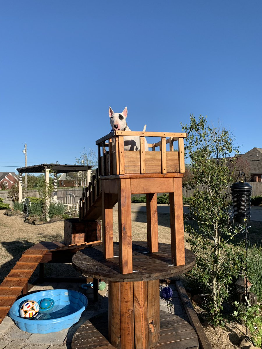So we are pretty sure IggyD is part Billygoat. So Donna went and gathered all this stuff and we built him this to climb on.#bullterrier #billygoat<br>http://pic.twitter.com/YHUtY4ETjg