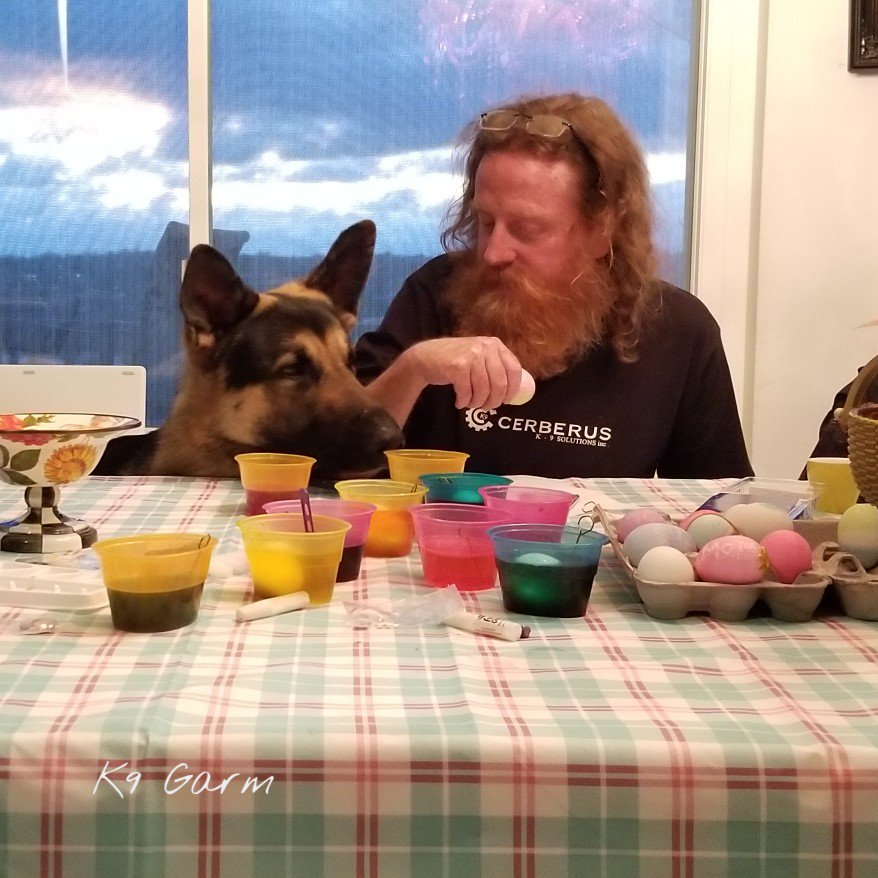 Helping papa with the eggs (he loves eggs but already had his egg today!) #HappyEaster !  #K9Garm #SARK9 #dogsoftwitter #dog #dogs #germanshepherd #gsd #moosedog #Easter #EasterWeekend #EasterSaturday #EasterBunny #Easter2019<br>http://pic.twitter.com/sdnMurruTK
