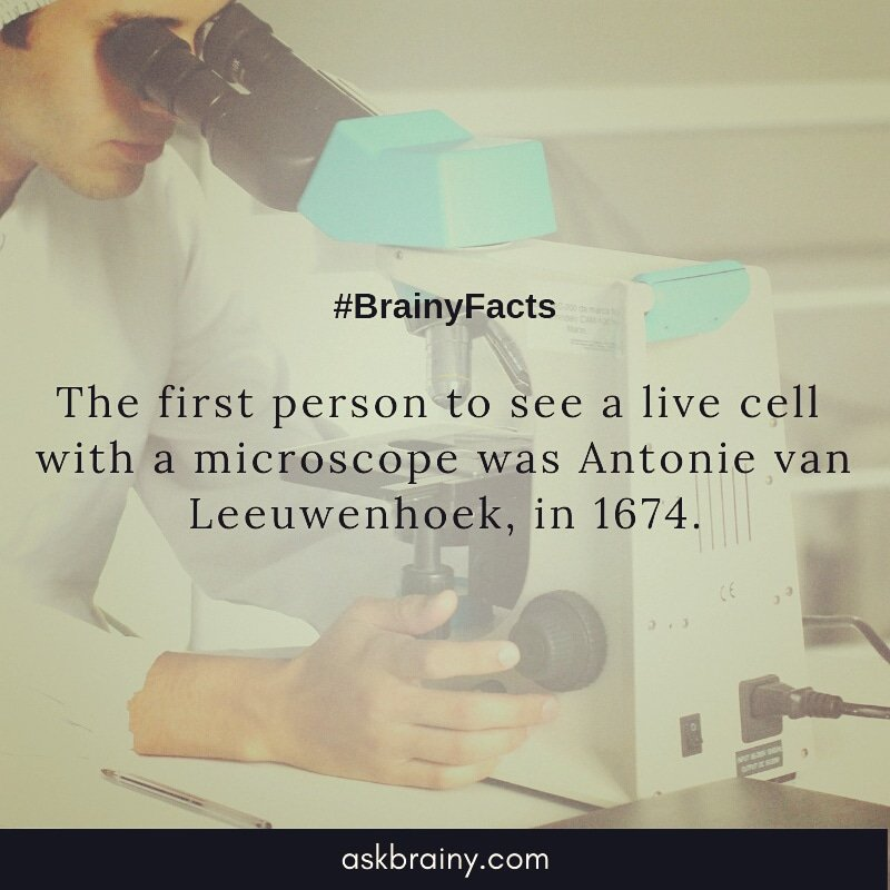 #factsoftheday #facts #science #biology #world #human #cells #microbiology #microscope #antonievanleeuwenhoek #neatherlands #askbrainy #amazing #research