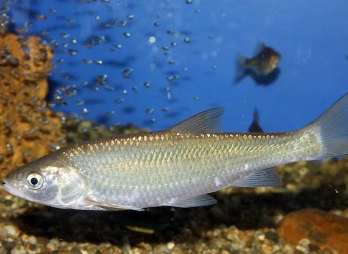 дополнительные элементы виды рыб в дону фото белая горячка