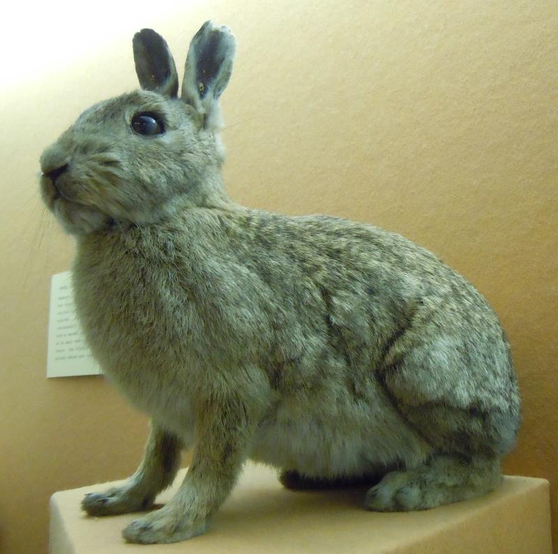 A stuffed bunny