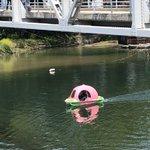岡山の人力ボートよく見たら桃だった!どんぶらこ感が凄くて笑える!