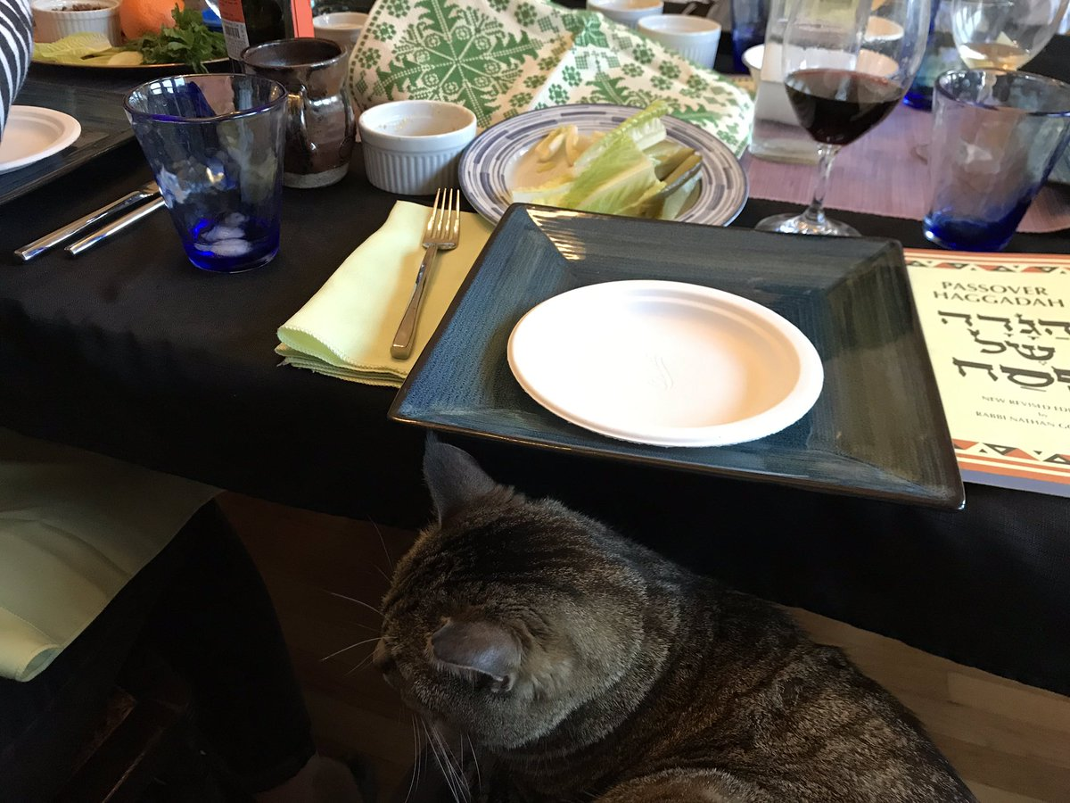 Put on your yarmulke; It's time for meowtzah.