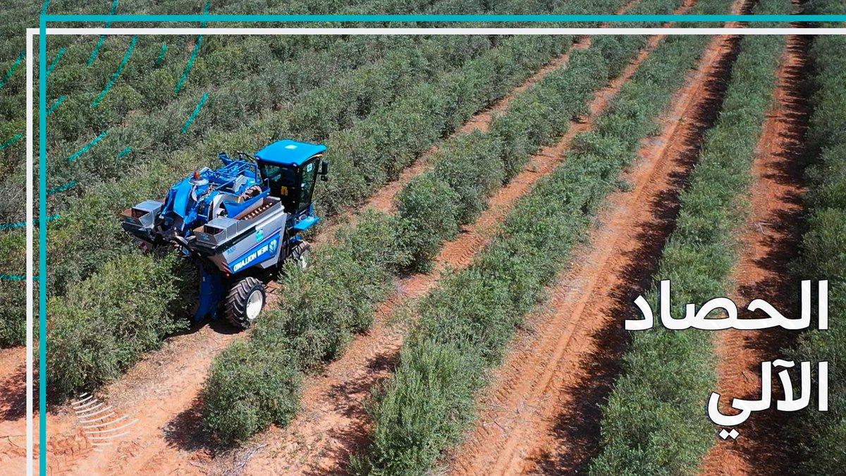 """حصاد آلي، وزيتون عضوي، وجوائز عالمية، في """"نادك"""" الزراعية. #التواصل_الحكومي_بالجوف."""
