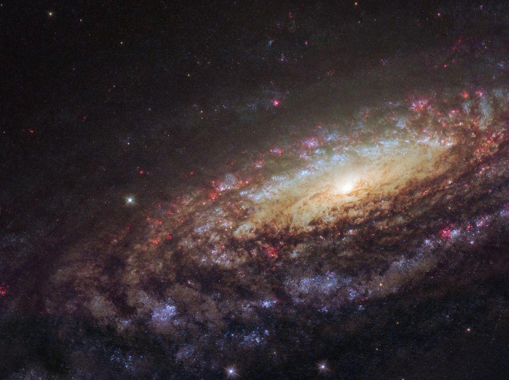 Esta galaxia es NGC 7331. Está a 50 millones de años-luz y en esta fotografía vemos muchas cosas: las viejas estrellas de su centro, las estrellas jóvenes y masivas (azules) en los brazos, y sus regiones de formación de estrellas (en rojo). Crédito: D. Milisavljevic #FelizDomingo