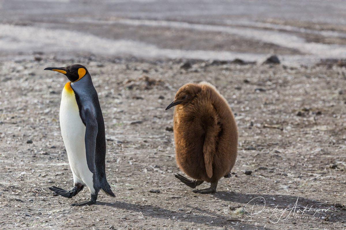 Прикольные картинки пингвины