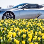 Bursting with colour. #LexusLC #Tulips