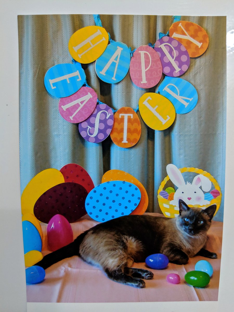 Happy #Easter from my family, who always sends me holiday photo cards of my Grandmom's cat!