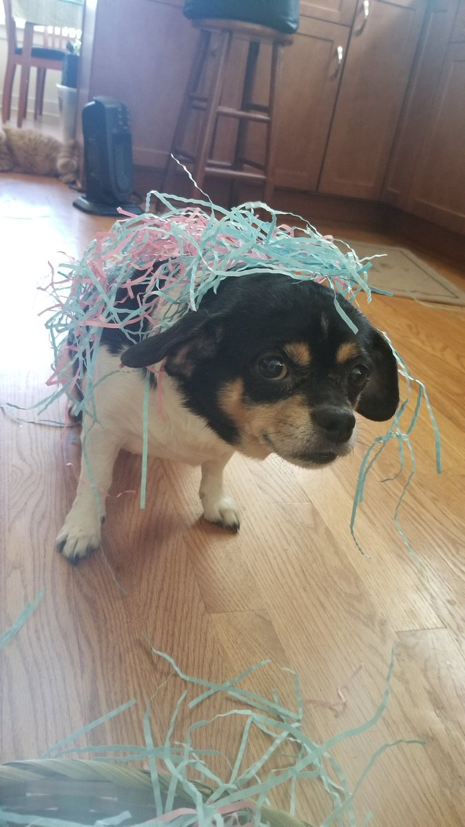 @dog_feelings Do you like my Easter bonnet? https://t.co/oUlHzX6tYK