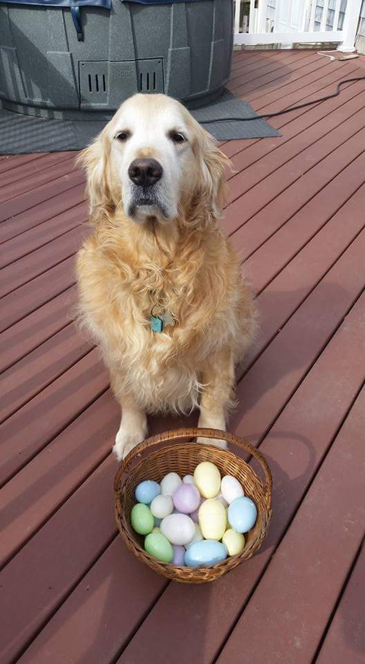 @dog_feelings Happy Easter https://t.co/fKKK71uUSU