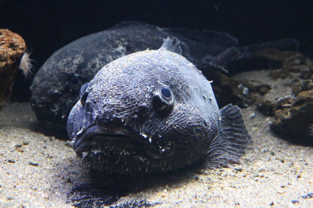 aquamarinestaff photo
